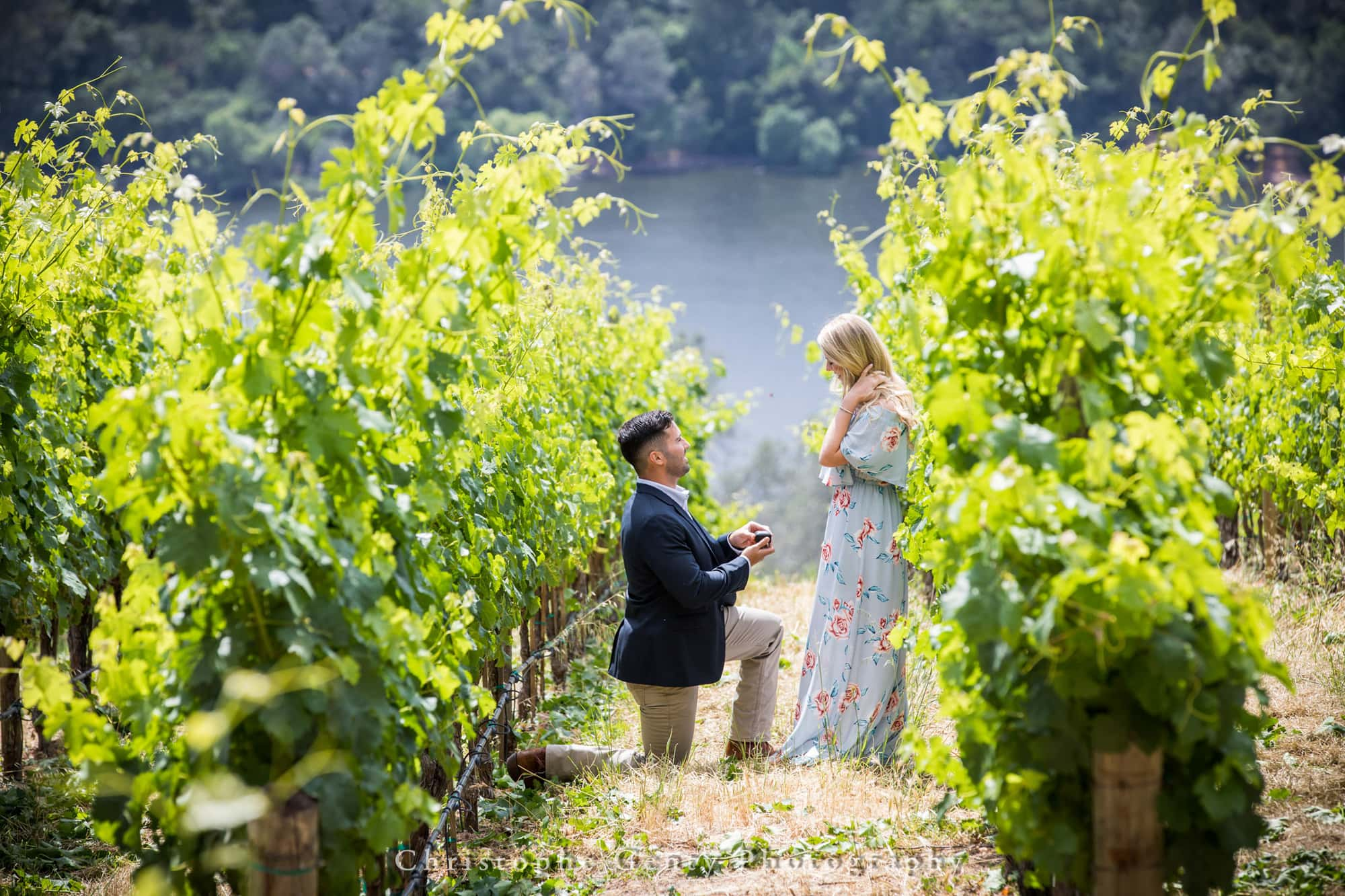 Marriage Proposal Photography in Napa -1003