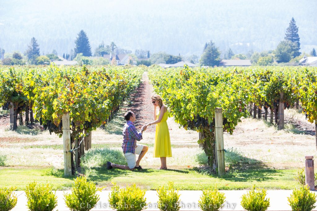 Best wineries to propose in the Napa Valley